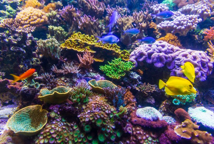 Underwater adventure with marine biologist: coral reef