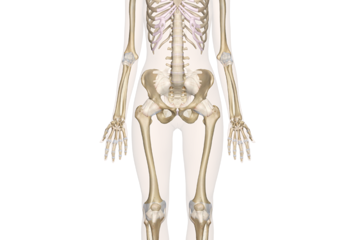 Intro to Human Body & Skeletal System( With a Real Skeleton)